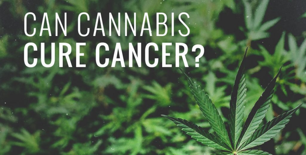 cannabis oil cancer cure